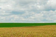 Haba del maíz y de la soja Fotografía de archivo libre de regalías
