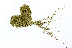 Haba verde Foto de archivo libre de regalías