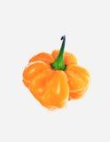 Habanero, πιπέρι τσίλι, καψικό annuum Στοκ Εικόνες