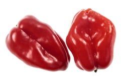 Habanero красного цвета перца Chili Стоковое Изображение