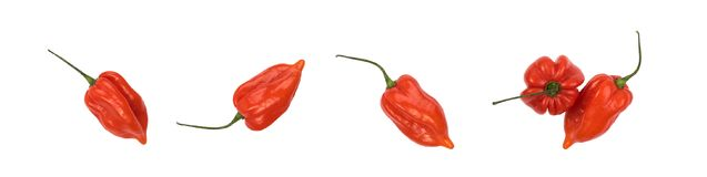 Habanero перца Chili Стоковые Фото