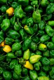 Habanero chili hottest pepper in the world Stock Photo