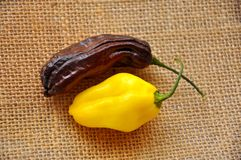 Habanero chili peppers Royalty Free Stock Photography