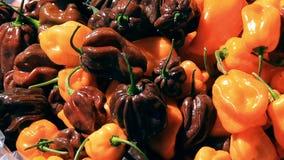 Habanero Chili Peppers 1 stock video