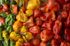 Habanero Chilies Royalty Free Stock Photography