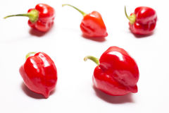 Habanero chilli fruit Stock Photos