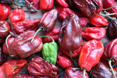 Habanero chilly pepper Royalty Free Stock Photography
