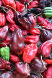Habanero chilly pepper Royalty Free Stock Photos