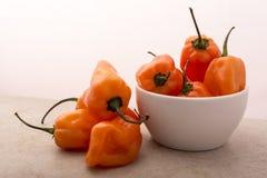 Habanero Pepper Stock Image
