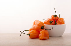 Habanero Pepper Stock Images