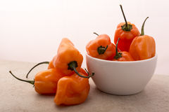 Habanero Pepper Stock Image