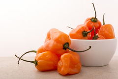 Habanero Pepper Stock Photography