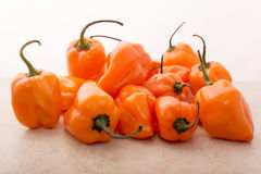 Habanero Pepper Royalty Free Stock Photos