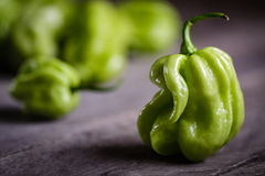 Habanero pepper. Hot habanero peppers on wooden background Royalty Free Stock Photos