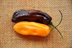 Habanero peppers Stock Image