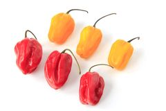 Habanero Peppers (Capsicum chinense) Royalty Free Stock Photos