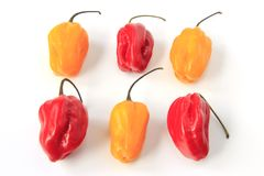 Habanero Peppers (Capsicum chinense) Royalty Free Stock Image