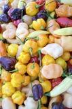 Habanero Peppers Stock Photography