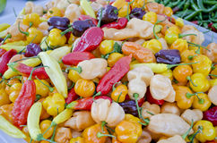 Habanero Peppers Royalty Free Stock Photography