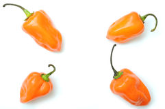 Habanero peppers pattern Stock Photo