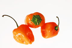 Habanero Peppers on White Background Stock Images