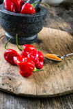 Habanero Red - very strongly hot pepper Stock Images