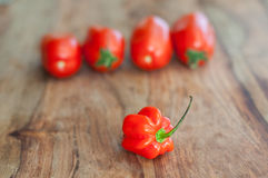 Habanero with tomatoes in background Stock Images