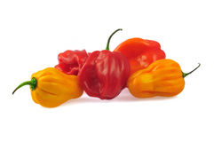 Habaneros stock photo