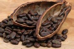 Habas asadas del cacao foto de archivo