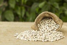 Habas blancas en bolso de la arpillera Foto de archivo libre de regalías