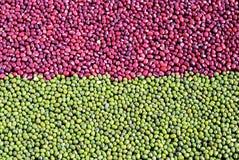 Habas de adzuki rojas mezcladas y habas de mung verdes Fotografía de archivo libre de regalías