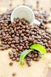 Habas de Cofee con las hojas blancas de la taza y del verde Imagen de archivo