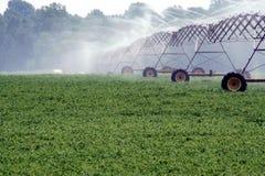 Habas de la soja y sistema de irrigación Foto de archivo libre de regalías