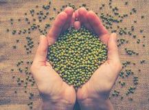 Habas de Mung Ingrediente para las comidas vegetarianas sanas imagen de archivo libre de regalías