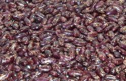 Habas de riñón manchadas rojas Imagen de archivo libre de regalías