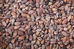 Habas del cacao Fotos de archivo