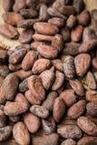Habas del cacao Foto de archivo