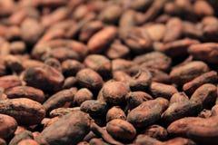 Habas del cacao Fotografía de archivo