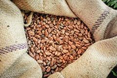 Habas del cacao en un bolso Fotos de archivo libres de regalías
