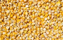 Habas del maíz Imagen de archivo