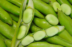 Habas - Peruvian Green Beans Stock Image