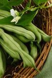 Habas verdes frescas Foto de archivo libre de regalías