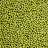 Habas verdes para el alimento Foto de archivo