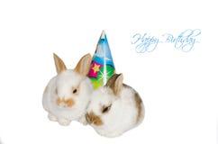 Habby birthday funny card. With sweet rabbits royalty free stock photo