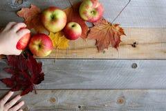 Habd als Kind het Grijpen Fruit van Fotospruit Stock Afbeelding