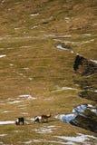 Haber ajardinado aéreo, caballos en prado Foto de archivo