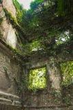 Haber arruinado espeluznante y haber crecido demasiado por el interior de las plantas de la mansión vieja Vida después del concep Fotografía de archivo