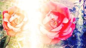 Haber sombreado colorido y empañado con imagen de fondo del efecto luminoso y diseño florales generados por ordenador del papel p stock de ilustración