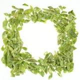 Habichuelas verdes tajadas congeladas Fotografía de archivo