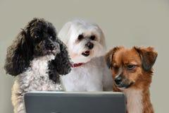 Habilidades dos trabalhos de equipa, grupo de cães que surfam no Internet fotografia de stock royalty free